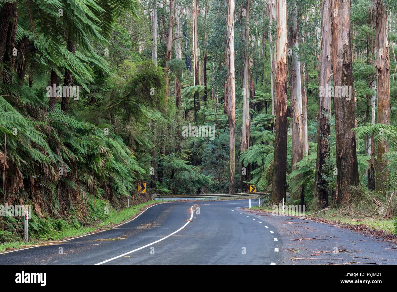 Curvy road, Maroondah Highway, Victoria, Australia - Stock Image