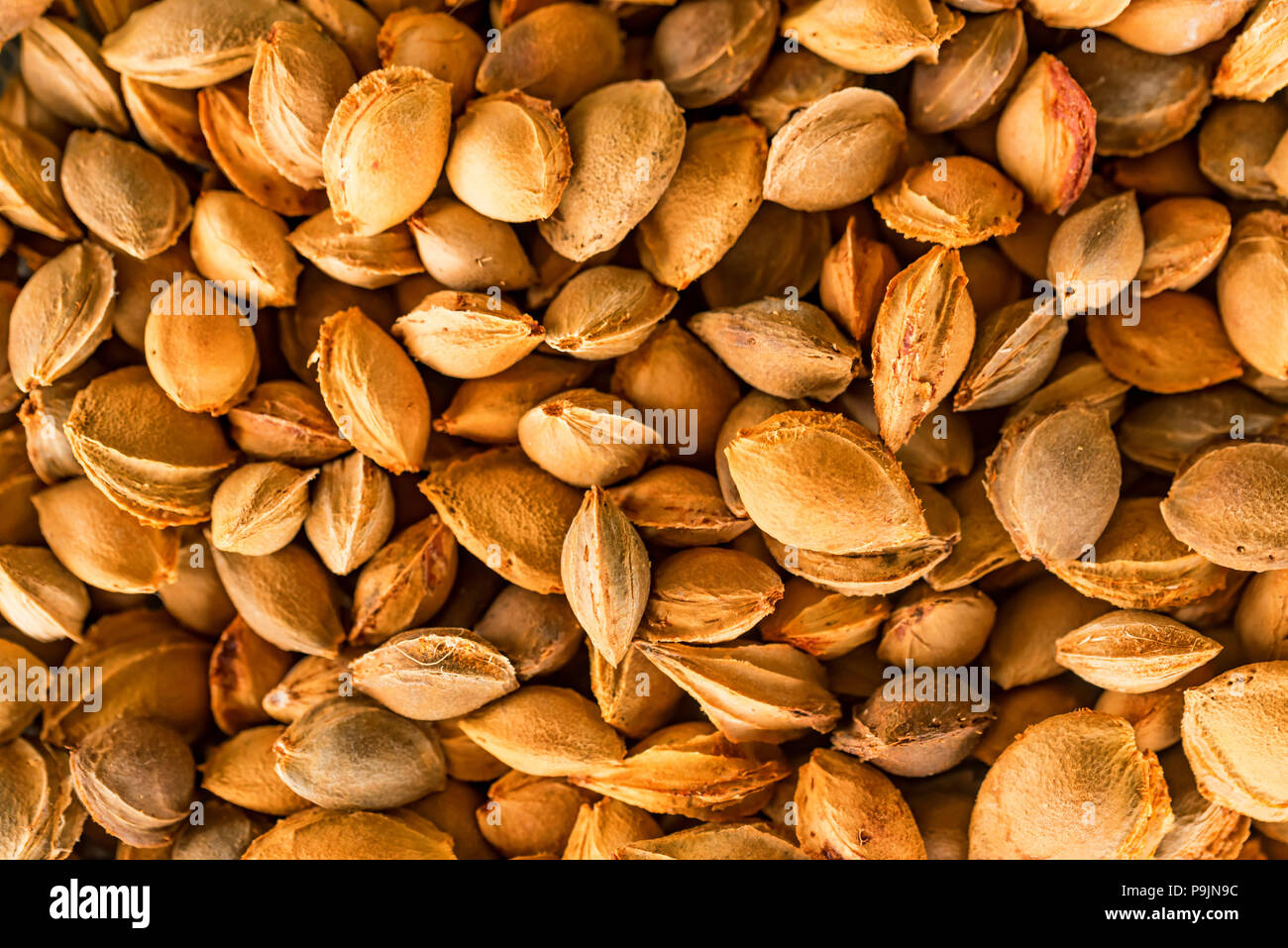 Apricot seeds background - Stock Image