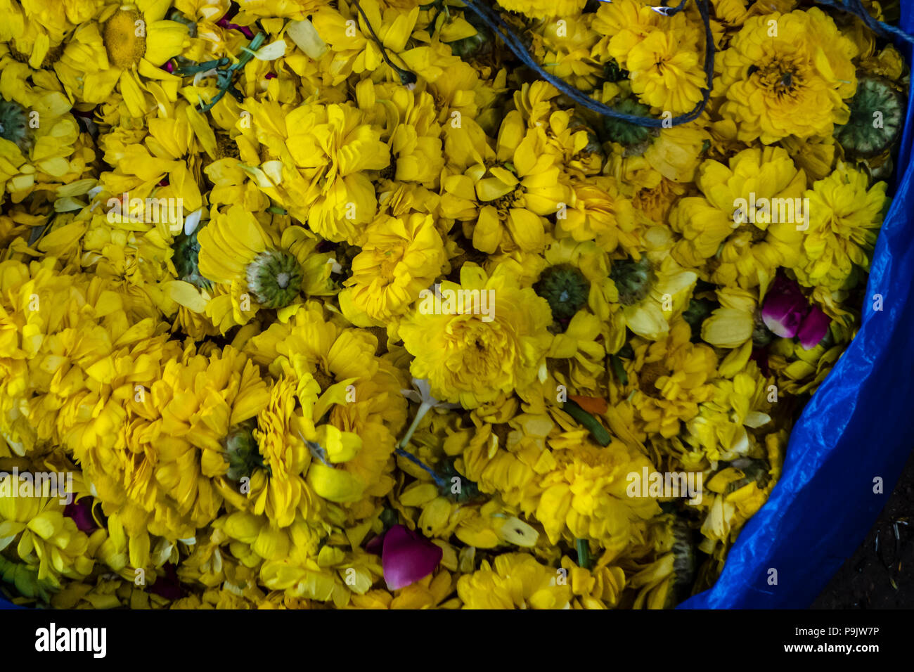 Basket of yellow flowers in a market in India Stock Photo
