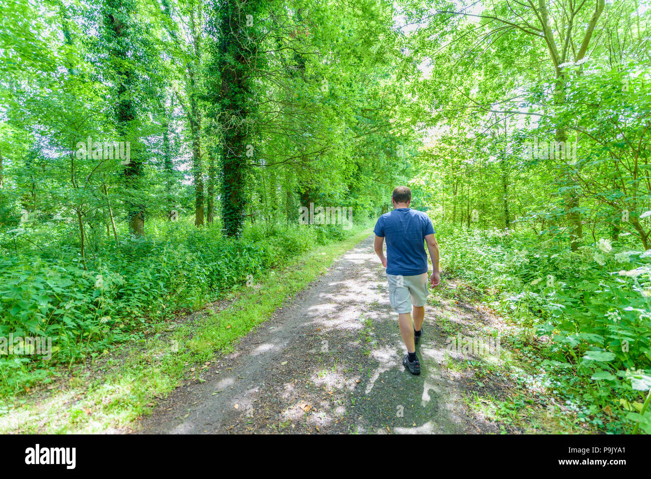 A man strides out on  a path in an english woodland on a sunny summer day. - Stock Image