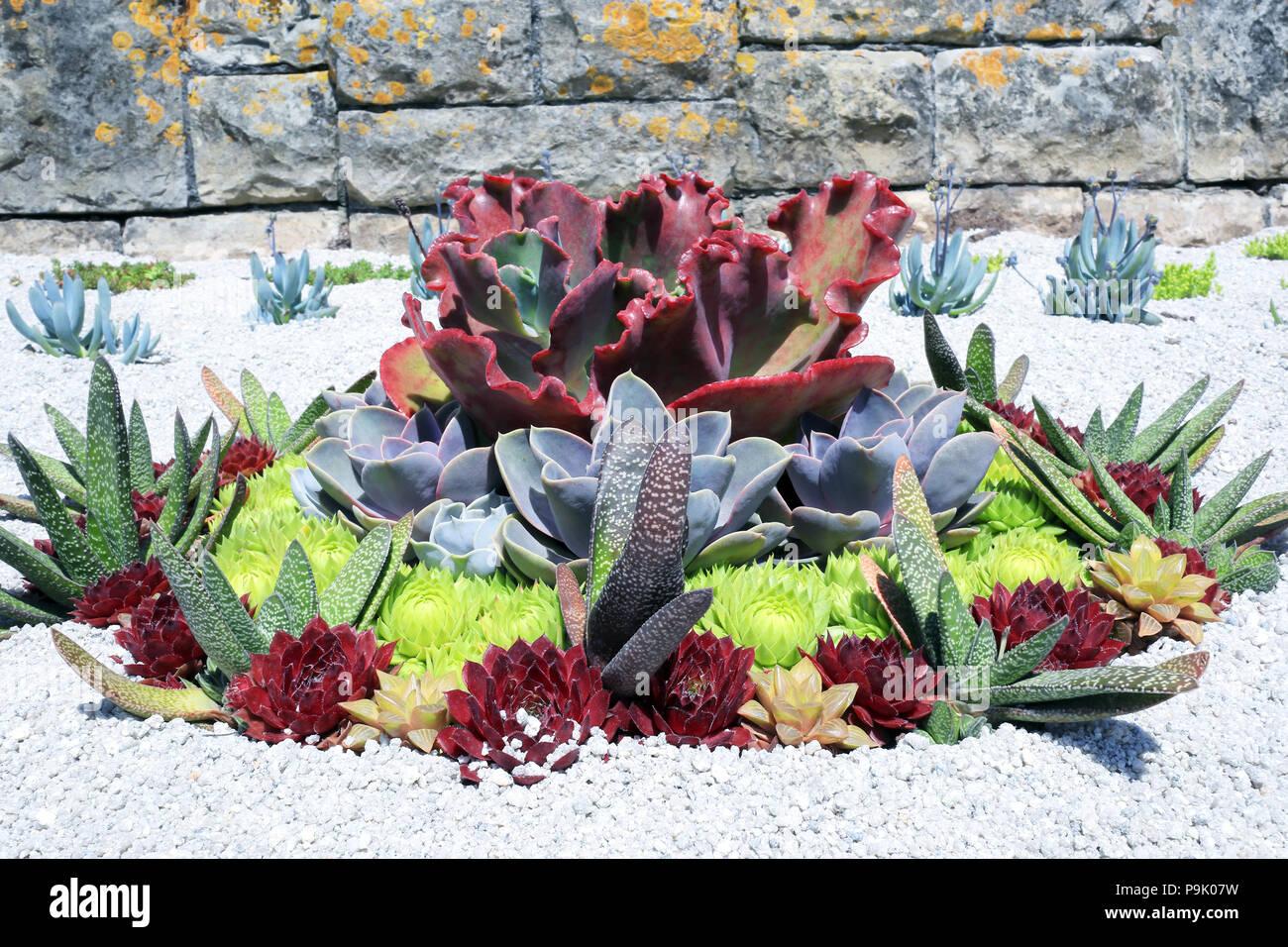 Various Types Of Succulents At Summer Desert Gardens Beautifully