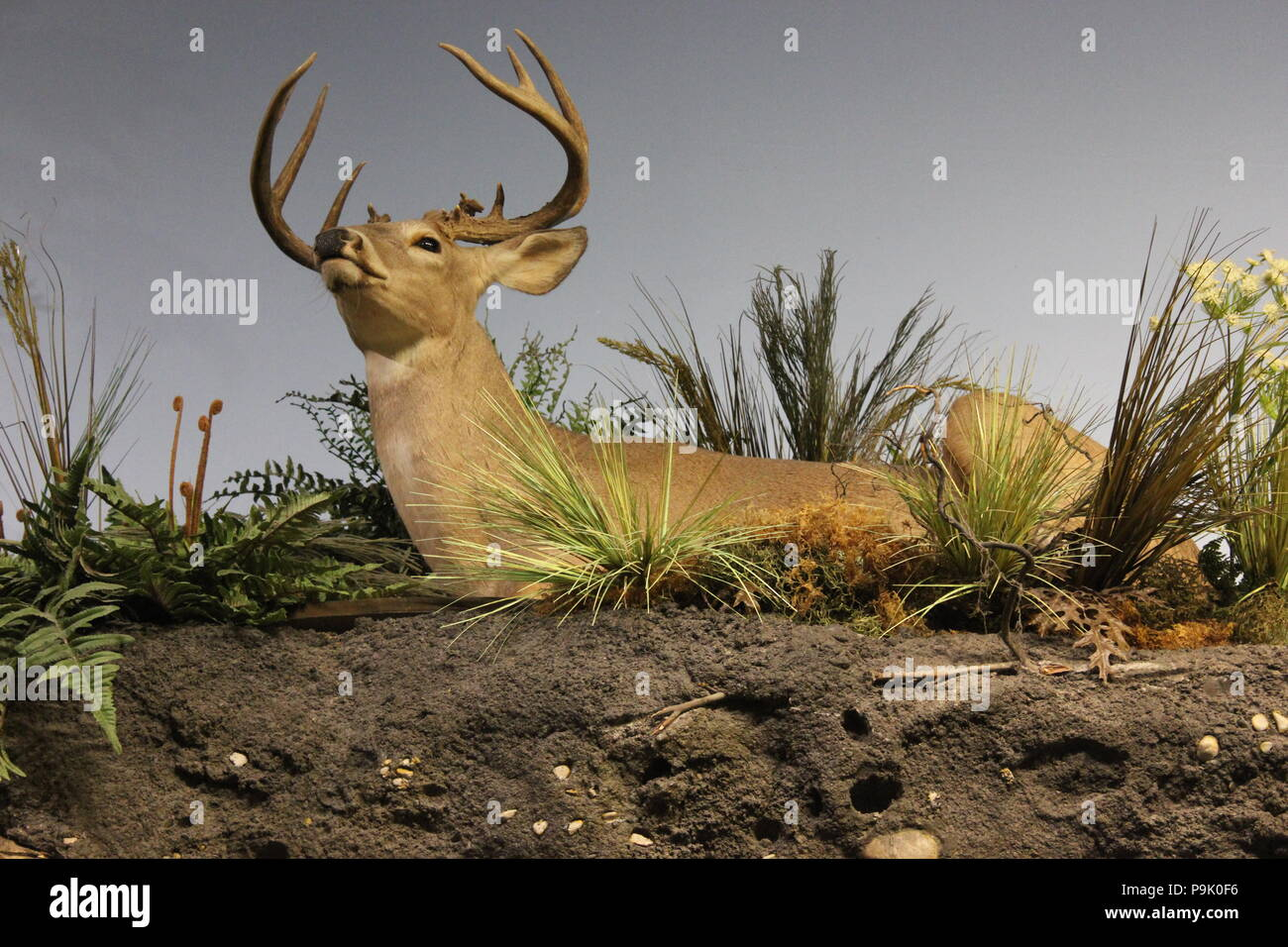 Stuffed reclining deer at the Children's Museum in Indianapolis, Indiana. - Stock Image