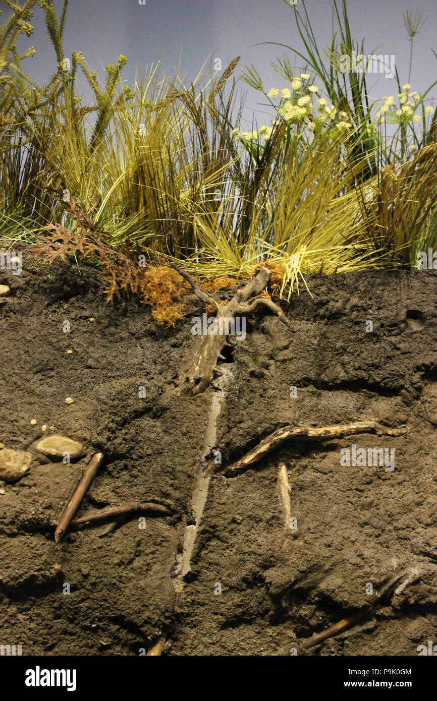 Cross section of the natural environment ground and dirt at the Children's Museum in Indianapolis, Indiana. - Stock Image