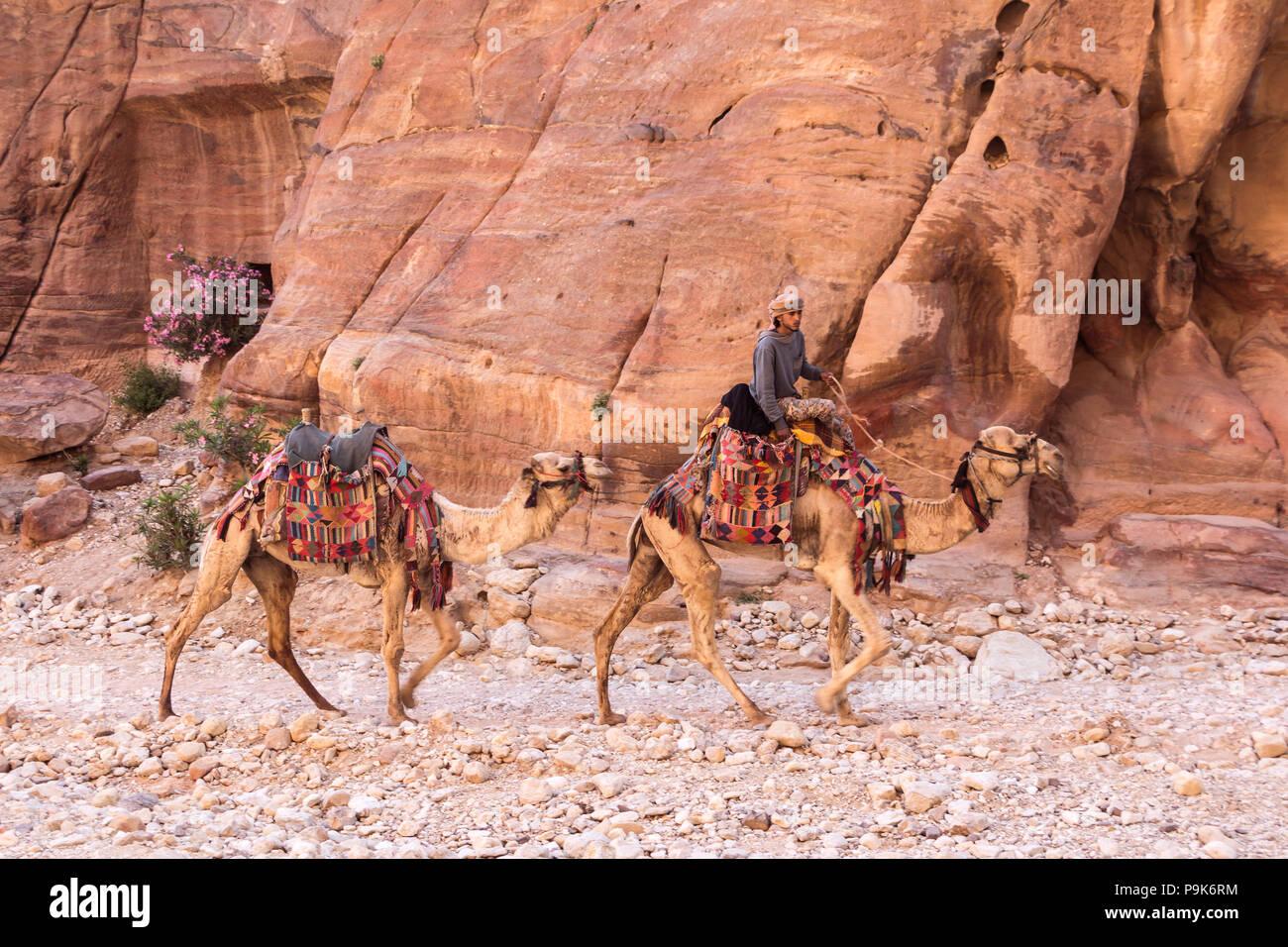 PETRA, JORDAN - APRIL 28, 2016: Bedouin young man riding on his camel in Petra Jordan Stock Photo
