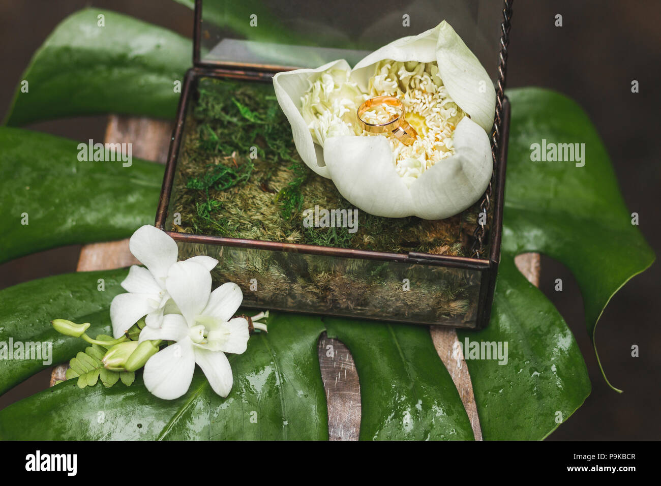 Wedding Rings Inside Of Big White Lotus Flower Close Up Tropical