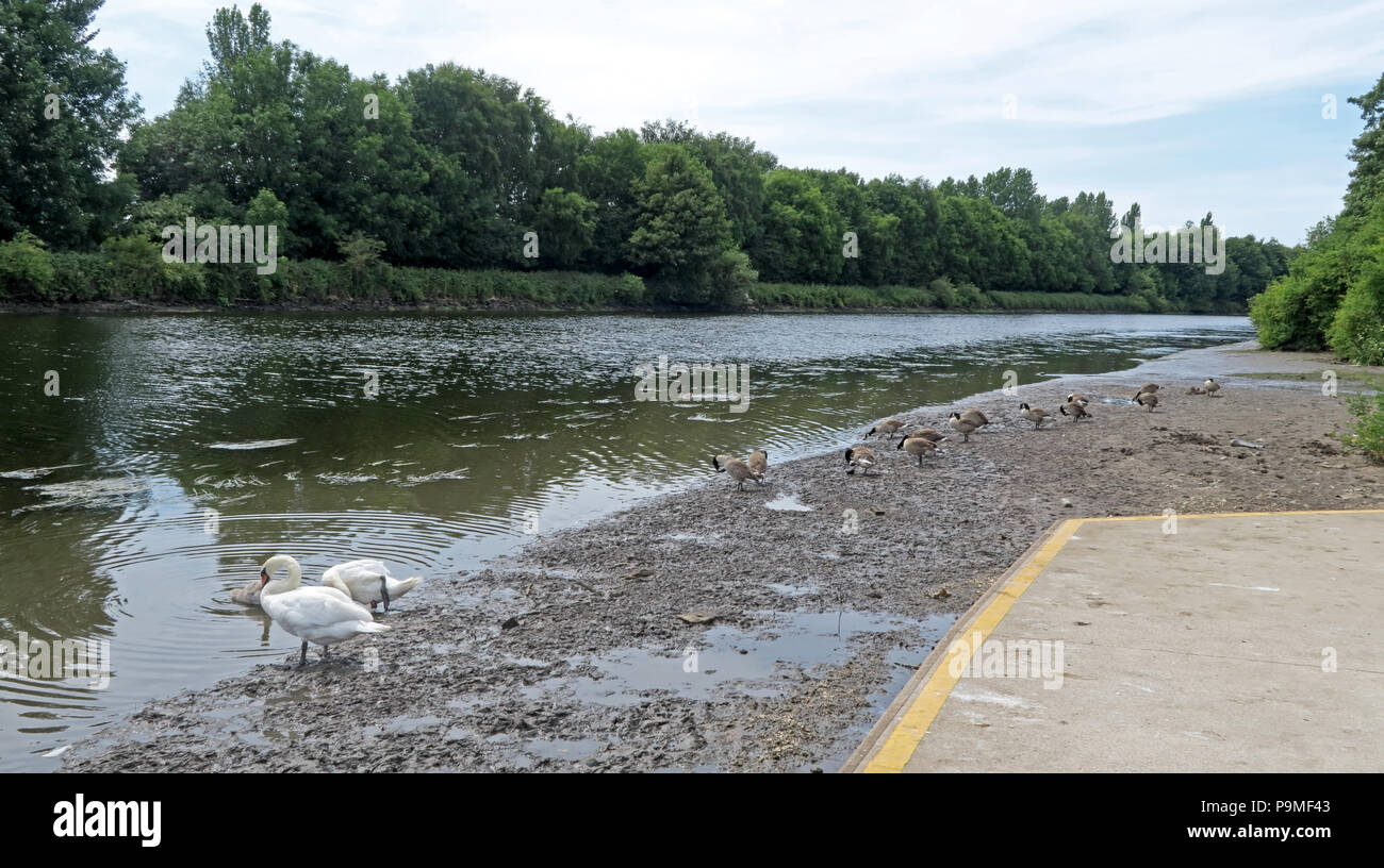 Warrington Rowing Club, Low Tide Mersey River, Summer 2018, cheshire, North West England, UK - Stock Image