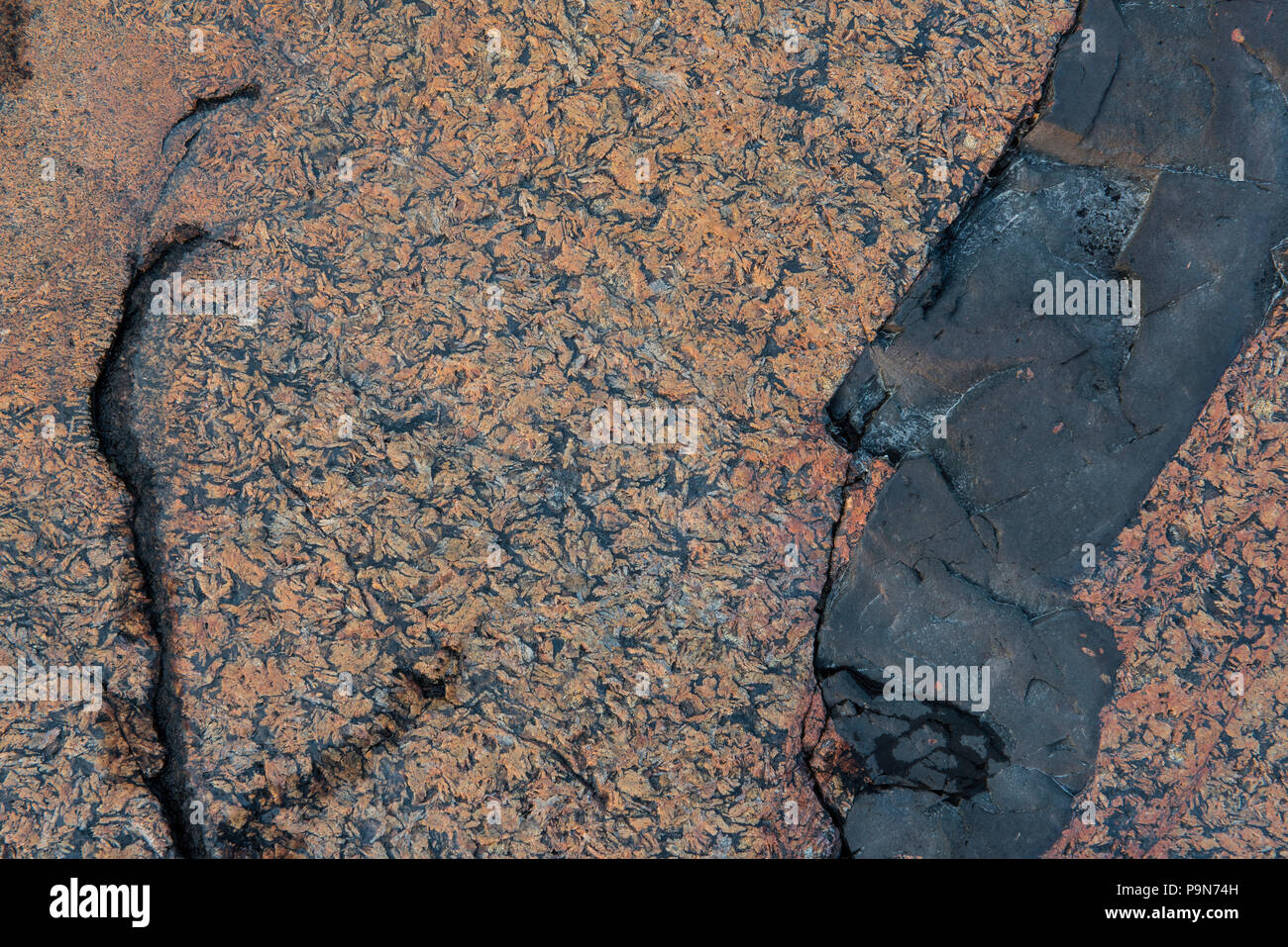 Diabase dike intrusion, rock along Lake Superior, Neys Provincial Park, Ontario, Canada, by Bruce Montagne/Dembinsky Photo Assoc - Stock Image