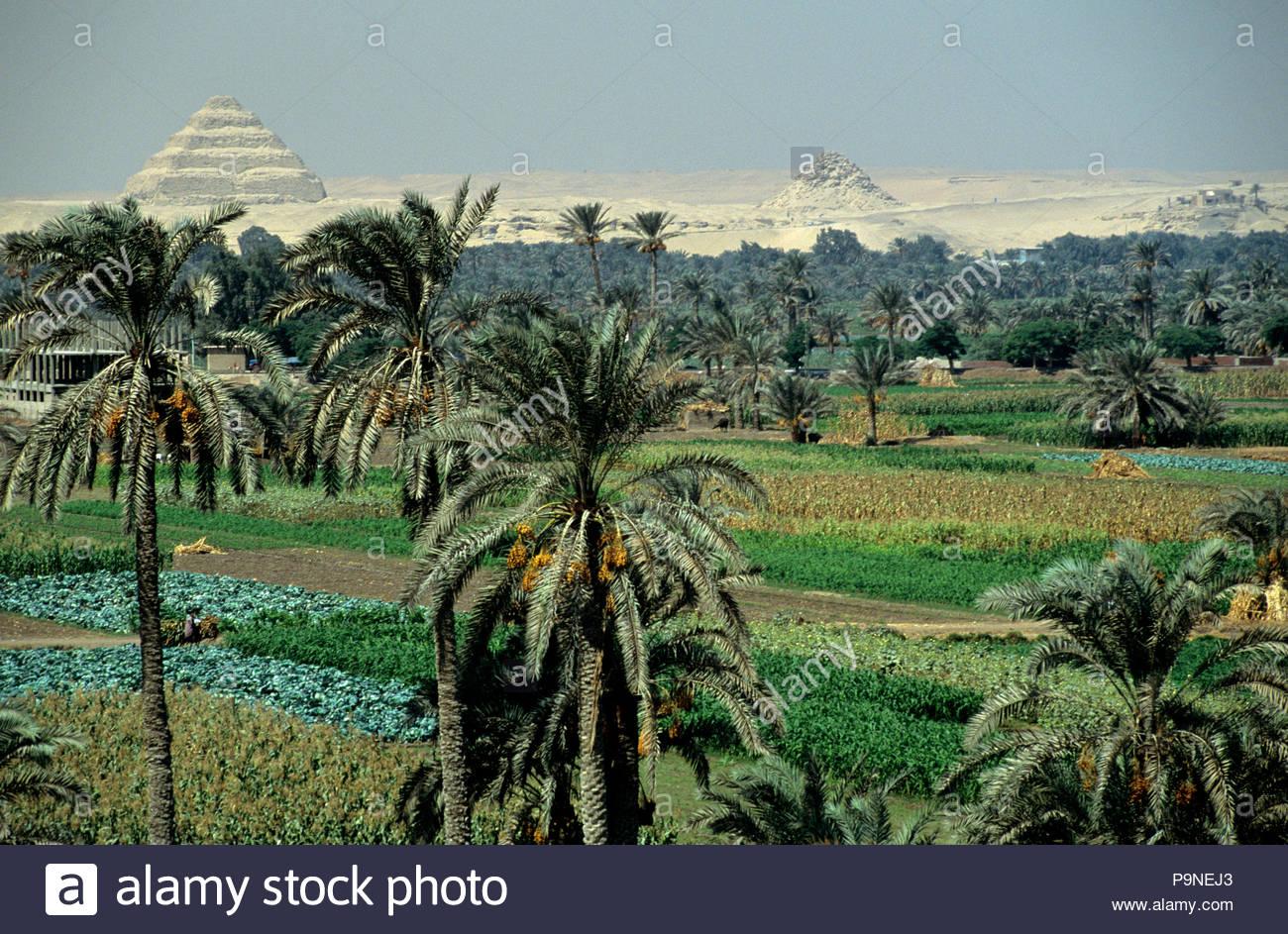 Djoser's step pyramid complex rises beyond lush farm land. Stock Photo