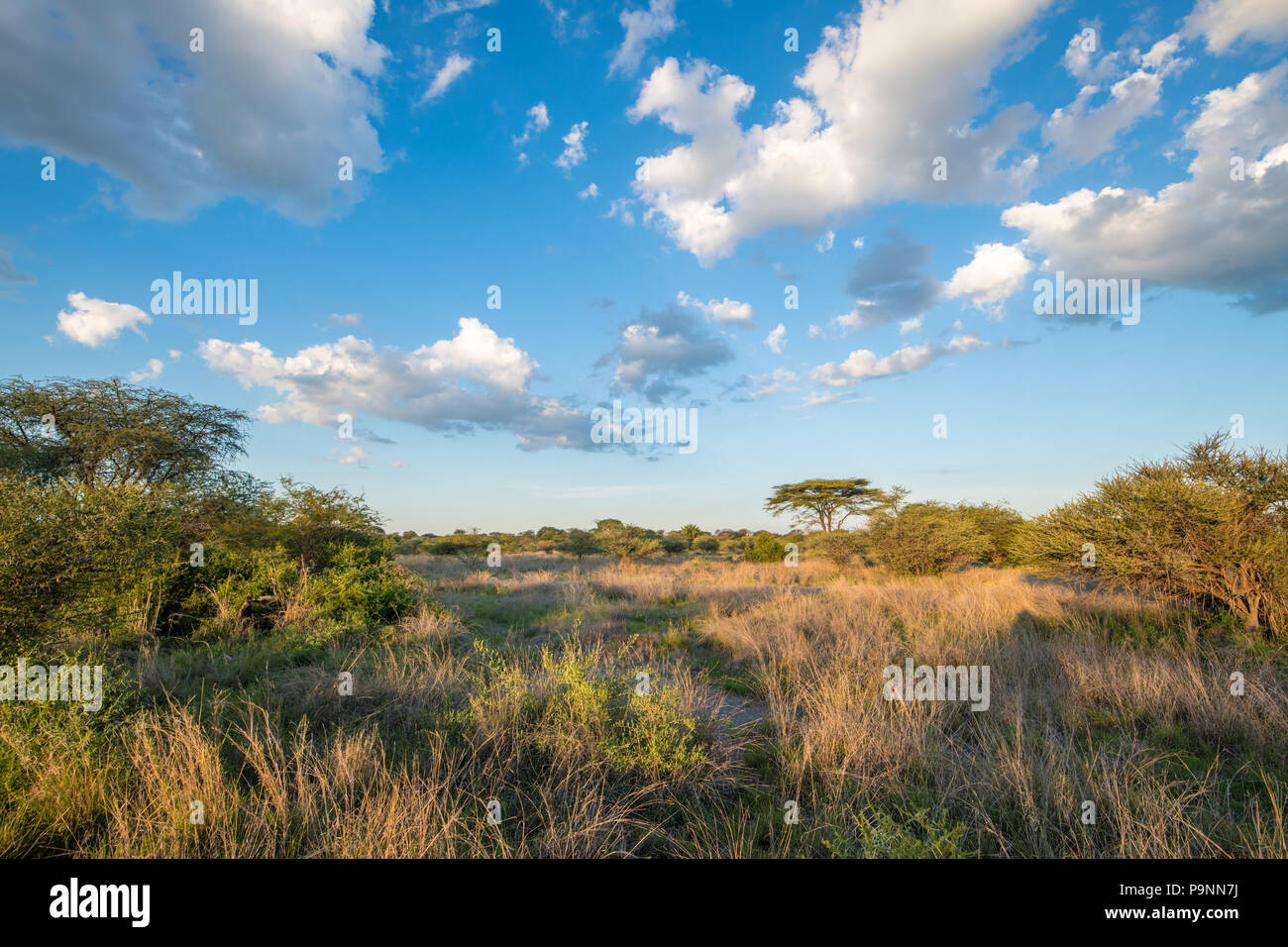 A landscape view of the grasslands in Hwange National Park. Hwange, Zimbabwe Stock Photo