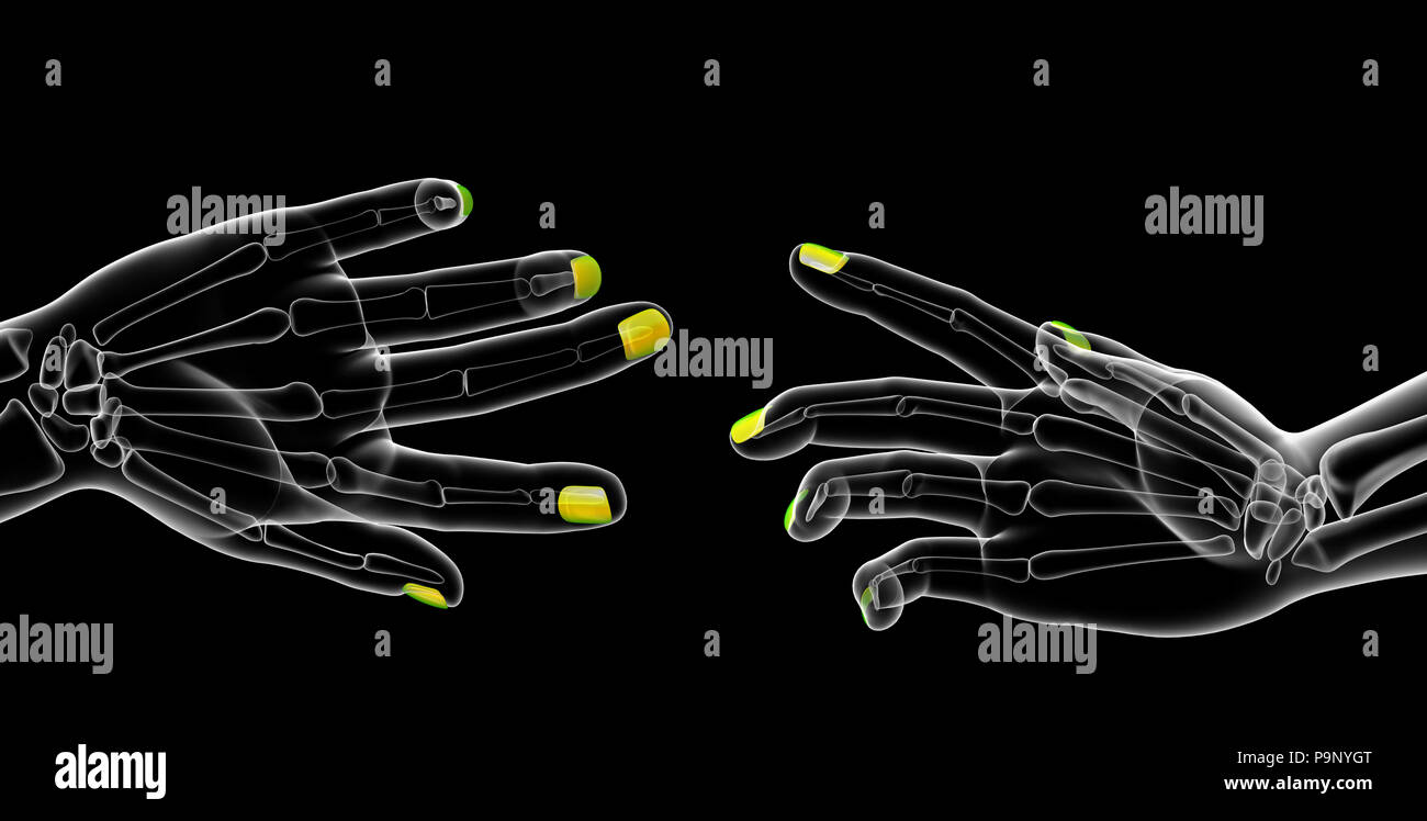 3d rendering illustration of nail anatomy Stock Photo: 212538952 - Alamy