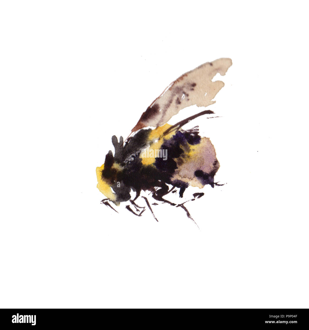 Watercolor bees isolated on white background. hand drawn watercolor illustration - Stock Image
