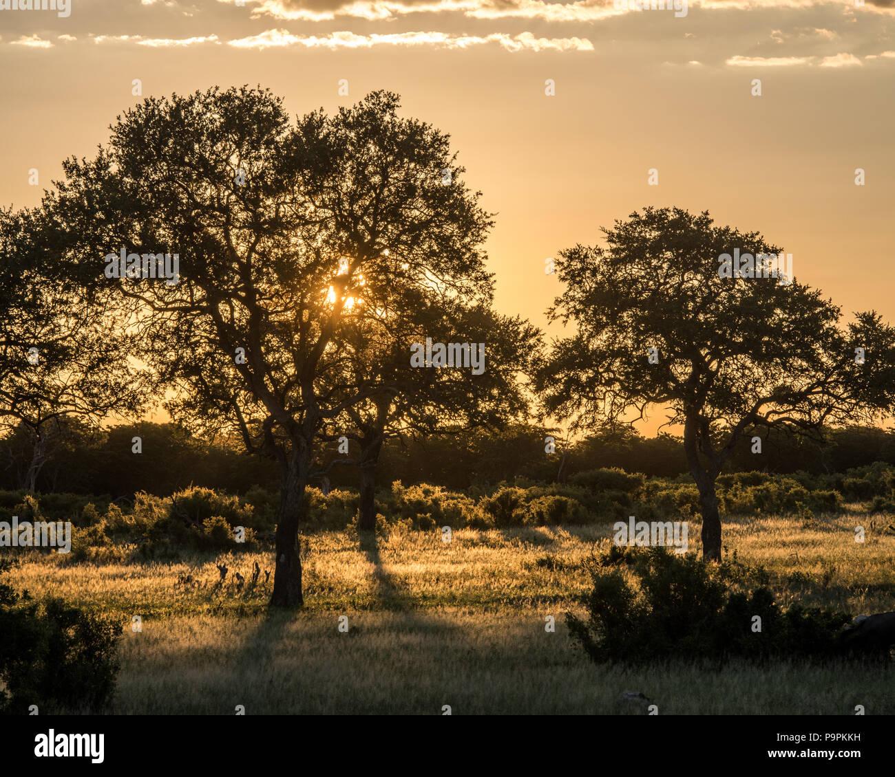 The sun sets over the grasslands in the Hwange National Park, Hwange, Zimbabwe Stock Photo