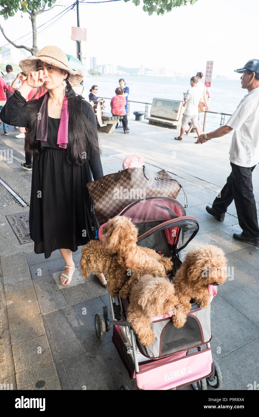 Dog,dogs,in,pram,trolley,pet,owner,Tamsui,port,sea,river,coast