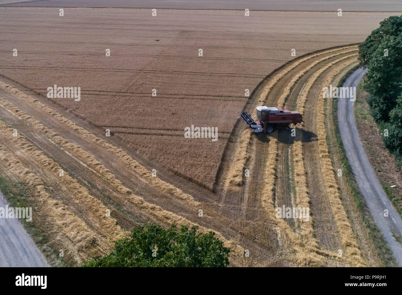 Aerial view on the combine harvester working on the large wheat field in Germany - Stock Image
