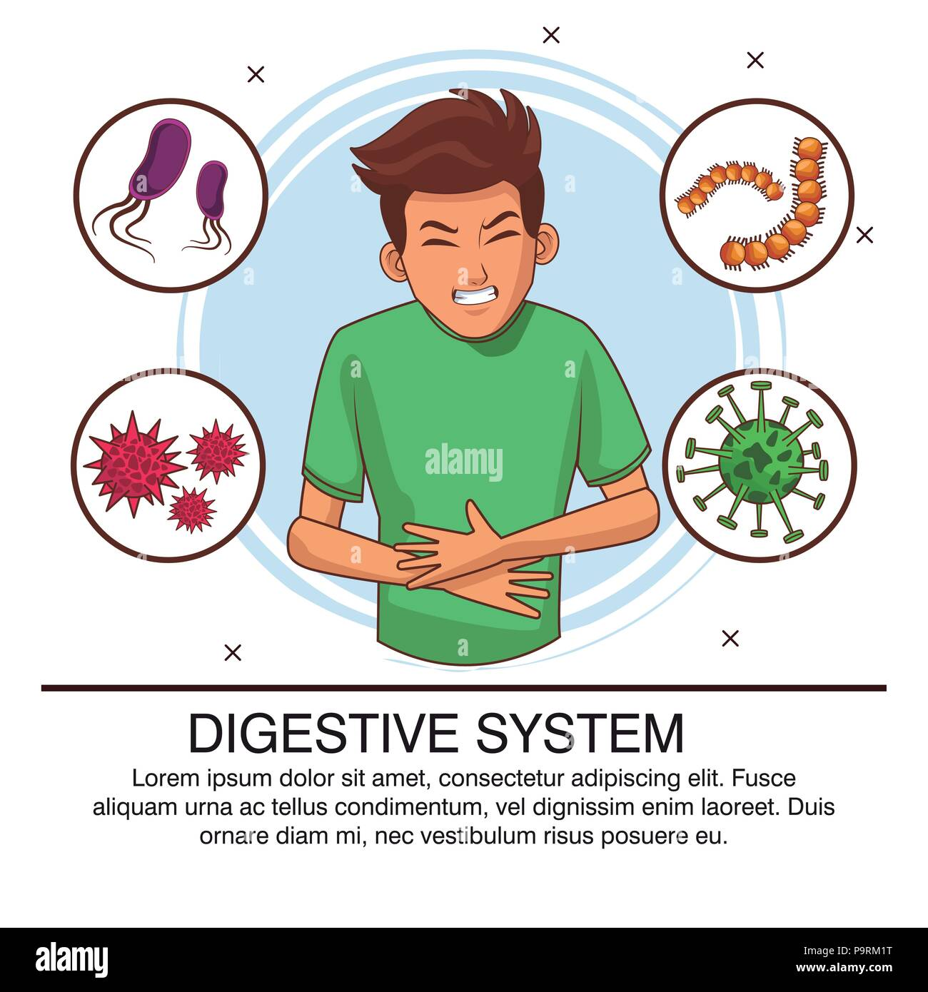 Digestive System Bacterias Poster With Information Vector