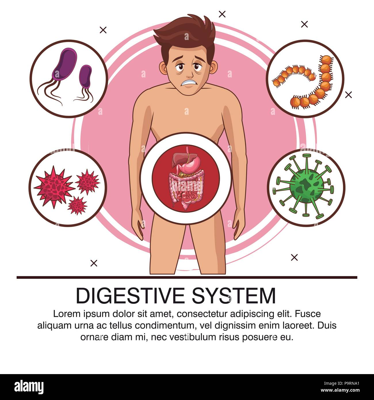 Digestive System Poster With Information Vector Illustration Graphic