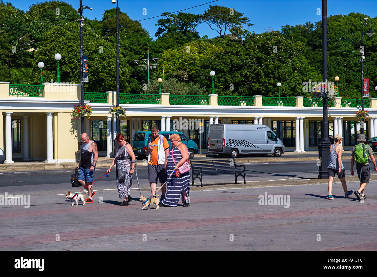 Small dogs being walked along the prom in Douglas, Isle of Man - Stock Image
