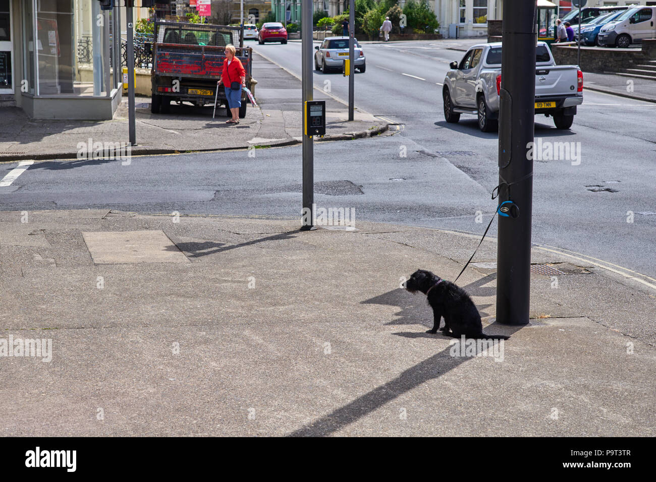 A small black dog tied up to a lampost outside a shop in the full sun and unable to lie down in Douglas, Isle of Man - Stock Image