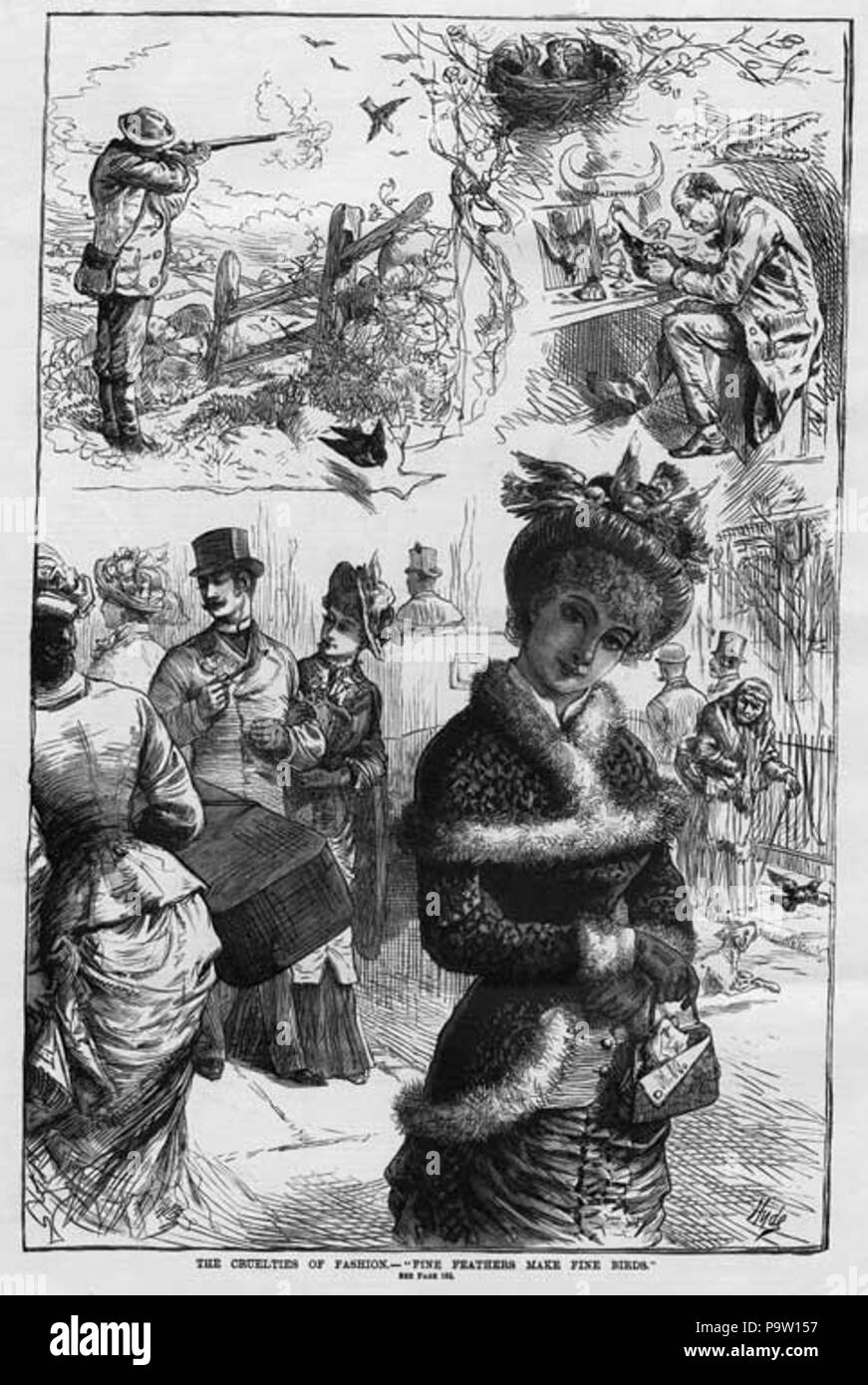 . English: 'The cruelties of fashion: fine feathers make fine birds'. From Frank Leslie's Illustrated Newspaper (November 10, 1883), p. 184. Originally published 1883 359 Cruelties-of-fashion - Stock Image