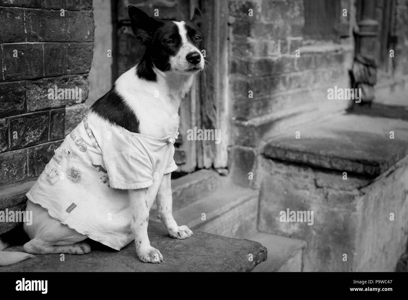 Dog with white shirt in front of a building in india monochrome - Stock Image
