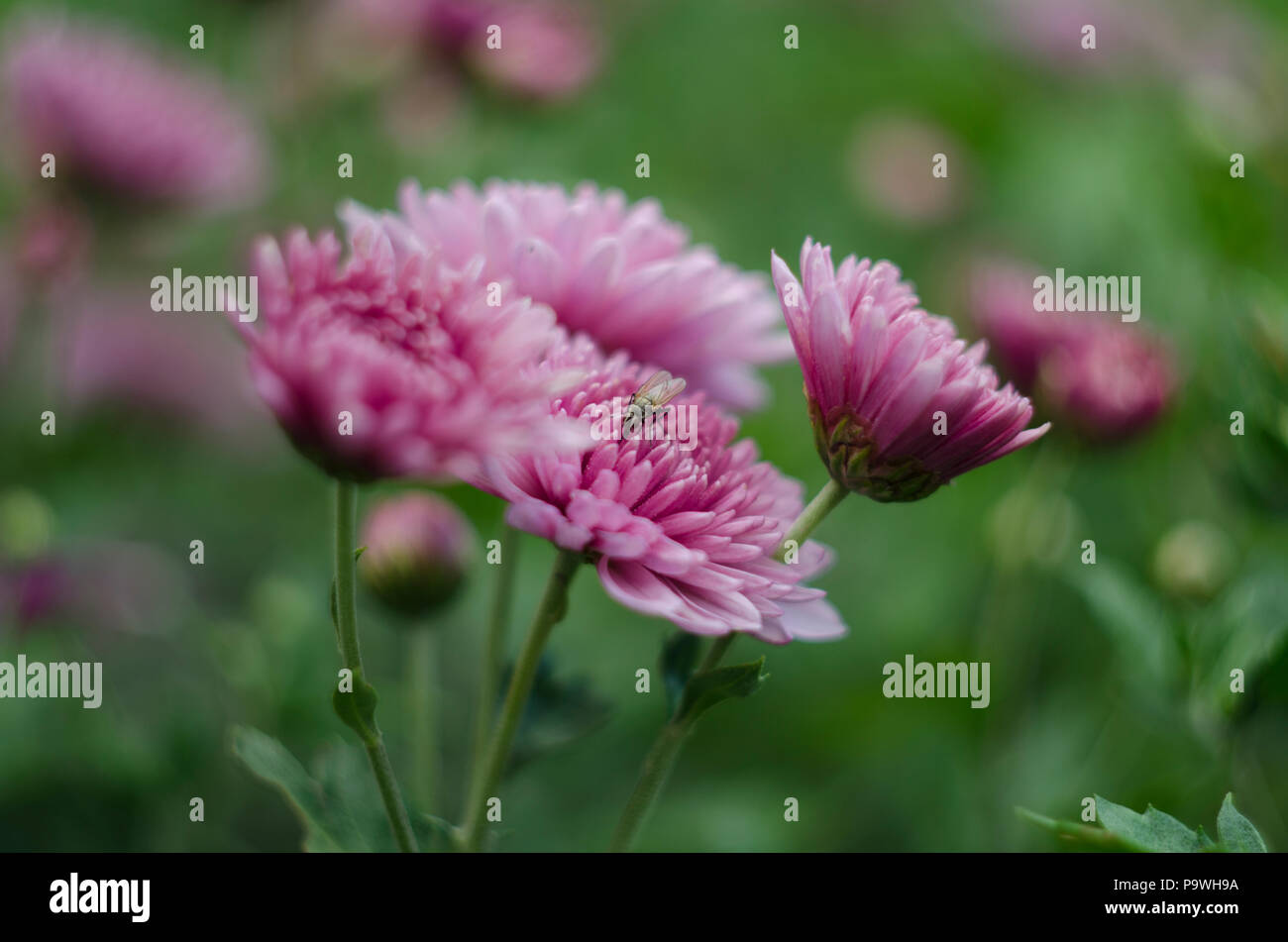 Beautiful Flowers Macro Abstract Art Background With A Soft Focus