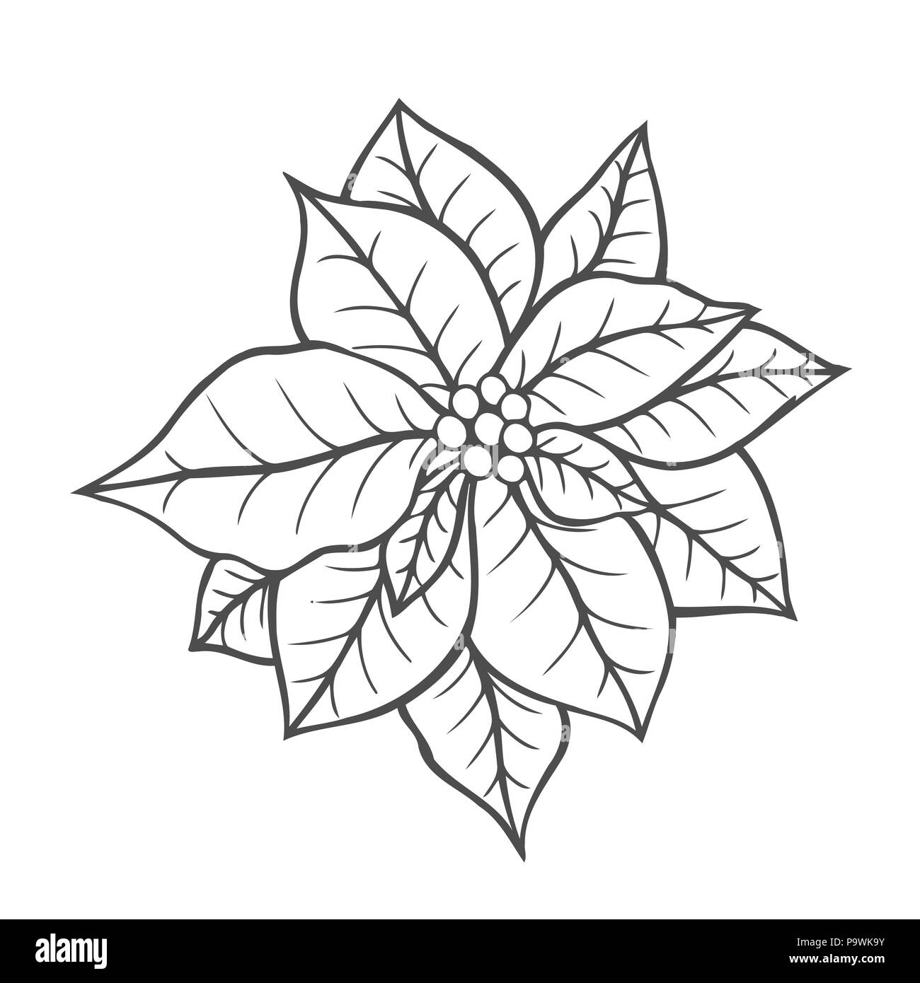 poinsettia isolated christmas flower vintage vector artwork black and white coloring book page for adult hand drawn holiday concept for greeting