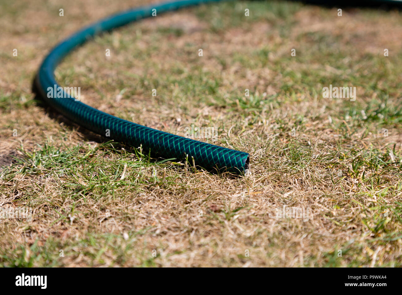 Hose lying on parched grass - Stock Image