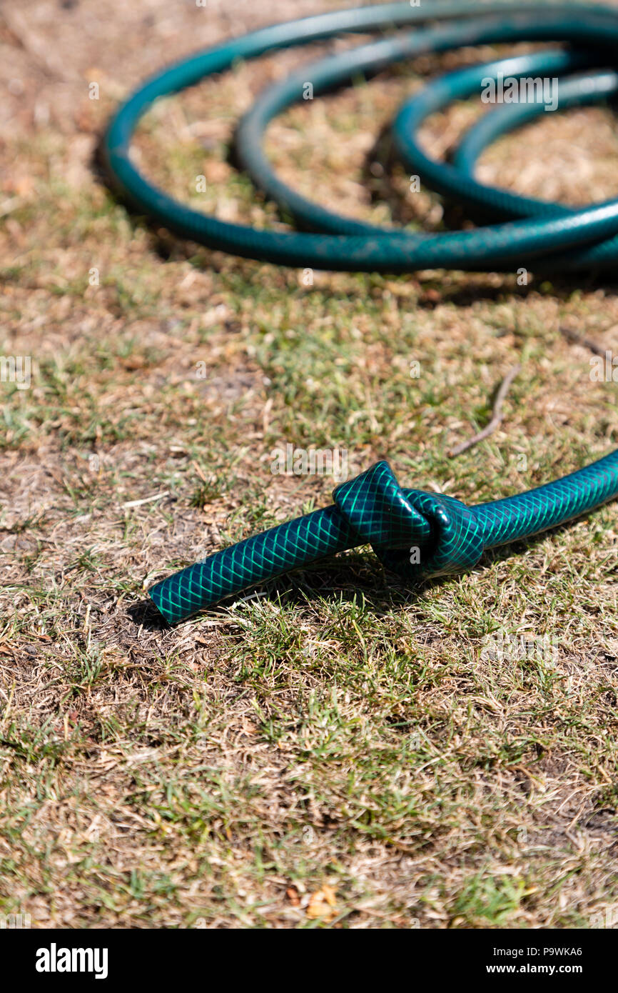 Knotted hose lying on parched grass - Stock Image