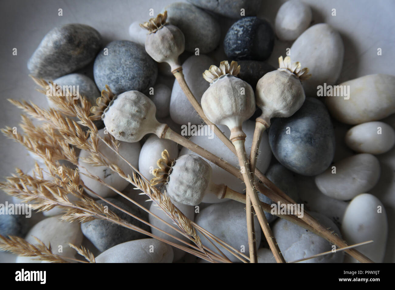 Grass seeds, blue grey and white sea pebbles and poppy heads. - Stock Image