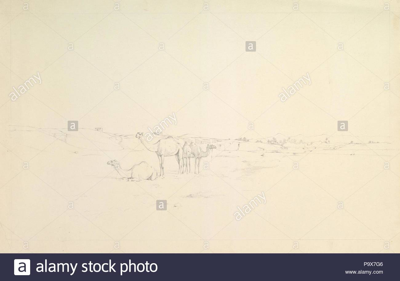 Camels in a landscape, late 19th–mid-20th century, Graphite, 16-5/8 x 25-5/8 in. (42.3 x 65 cm), Drawings, Howard Carter (British, London 1873–1939 London). - Stock Image