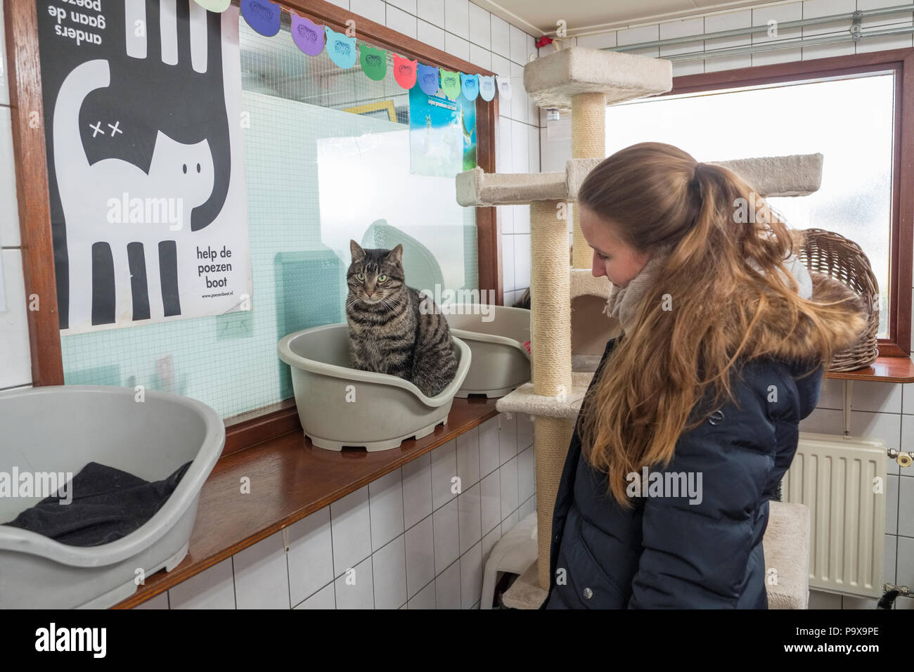 Cat in De Poezenboot, The Catboat, a barge which serves as a cat shelter in Amsterdam, Netherlands, Holland, Europe - Stock Image
