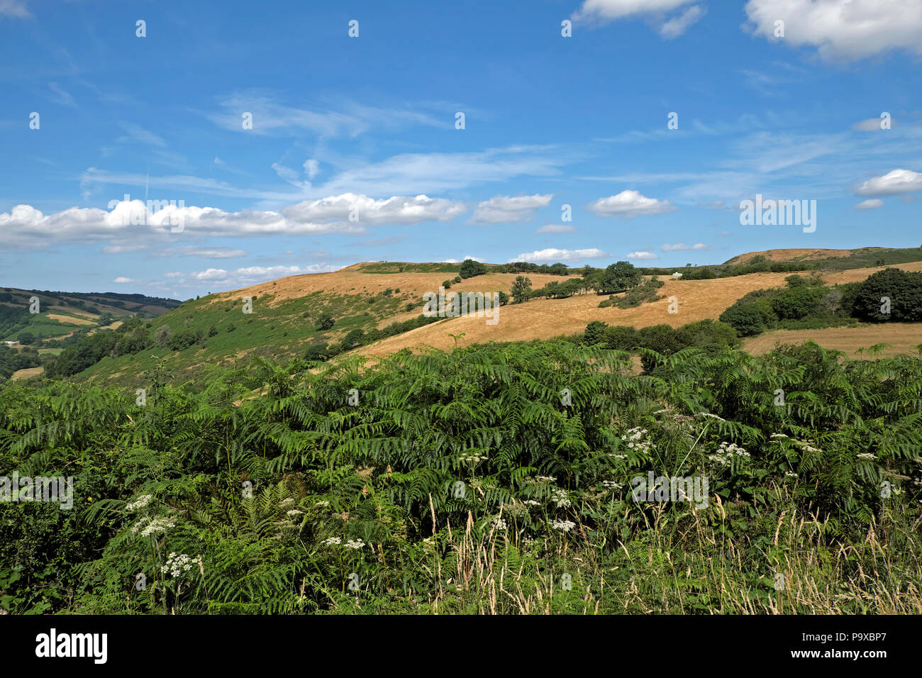 Parched brown hills and fields in July 2018 heatwave on farming land in Carmarthenshire, Wales UK  KATHY DEWITT - Stock Image