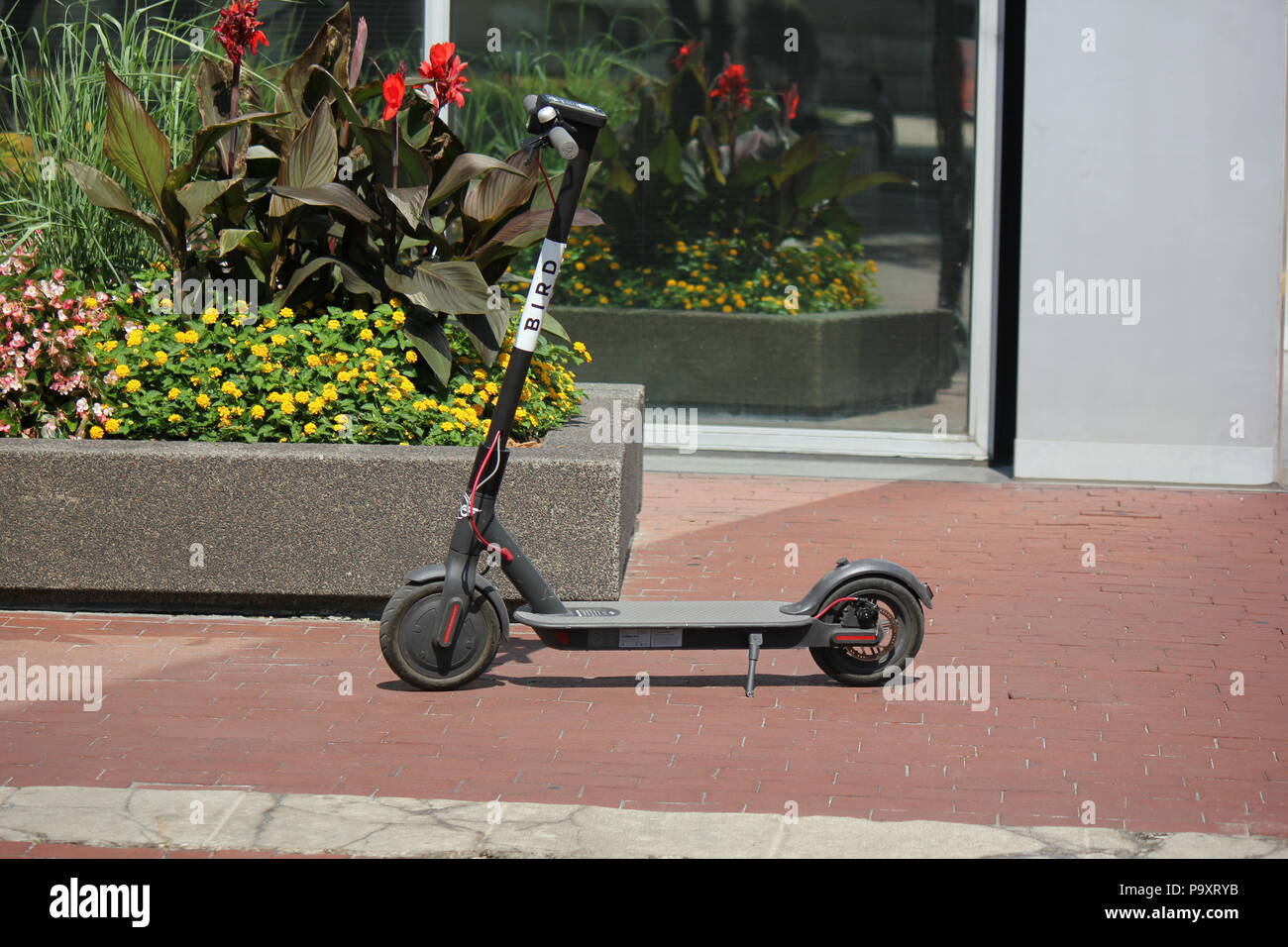 Controversial electric dockless Bird scooter parked in the Monument Circle in Indianapolis, Indiana. - Stock Image