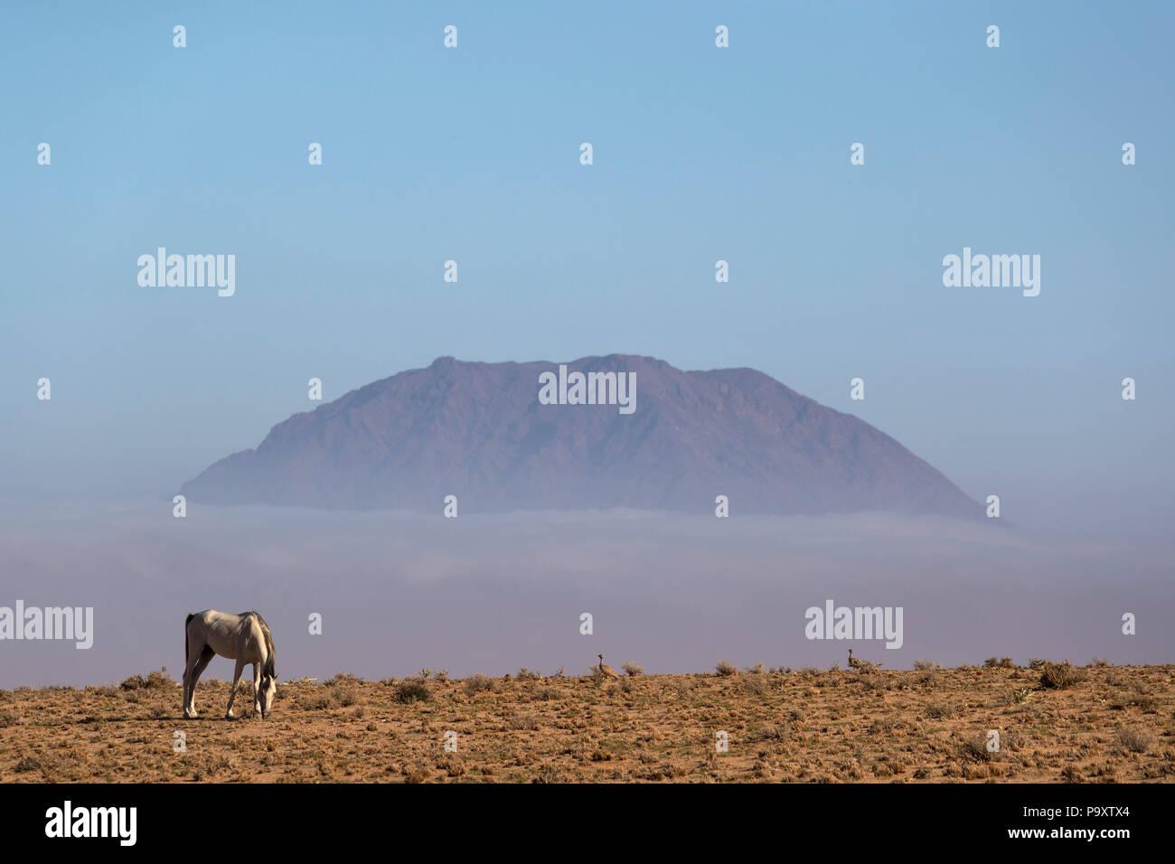 Wild horse, Aus, Namibia - Stock Image