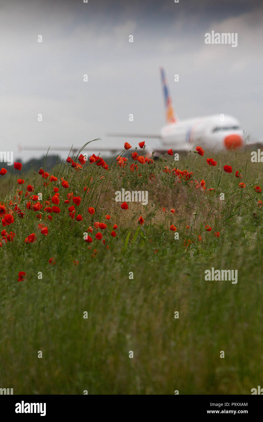 A poppy field on the edge of Milan-Linate Airport, Italy. - Stock Image