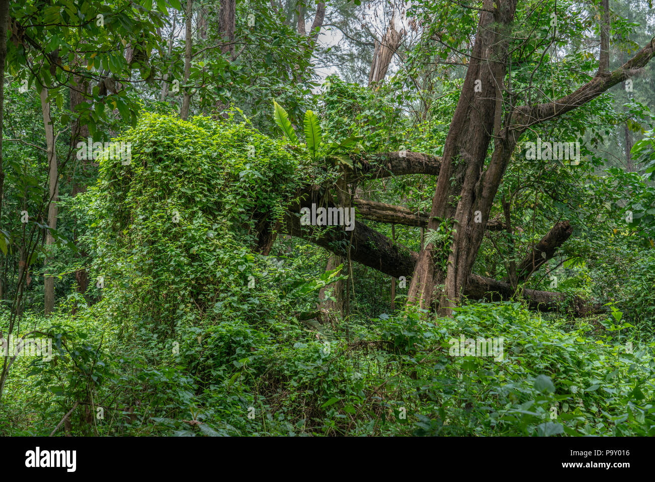 Singapore - july 15, 2018:  Dense Forrest. Coney Island, alternatively known as Pulau Serangoon, is a 133-hectare island located off the northeastern  - Stock Image