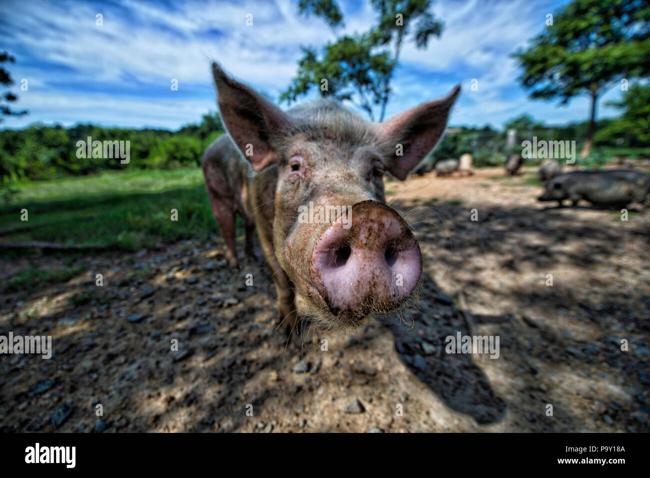 UNITED STATES: July 19, 2018: Rikki's Refuge, now in its 20th year, devotes 100 of its 450 acres to animal care and the rest is left wild for farm ani - Stock Image