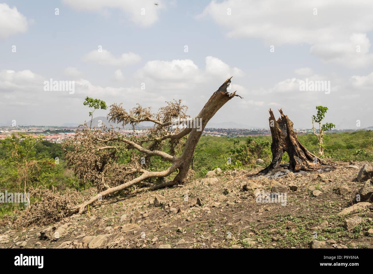 Deforestation by burning - Stock Image