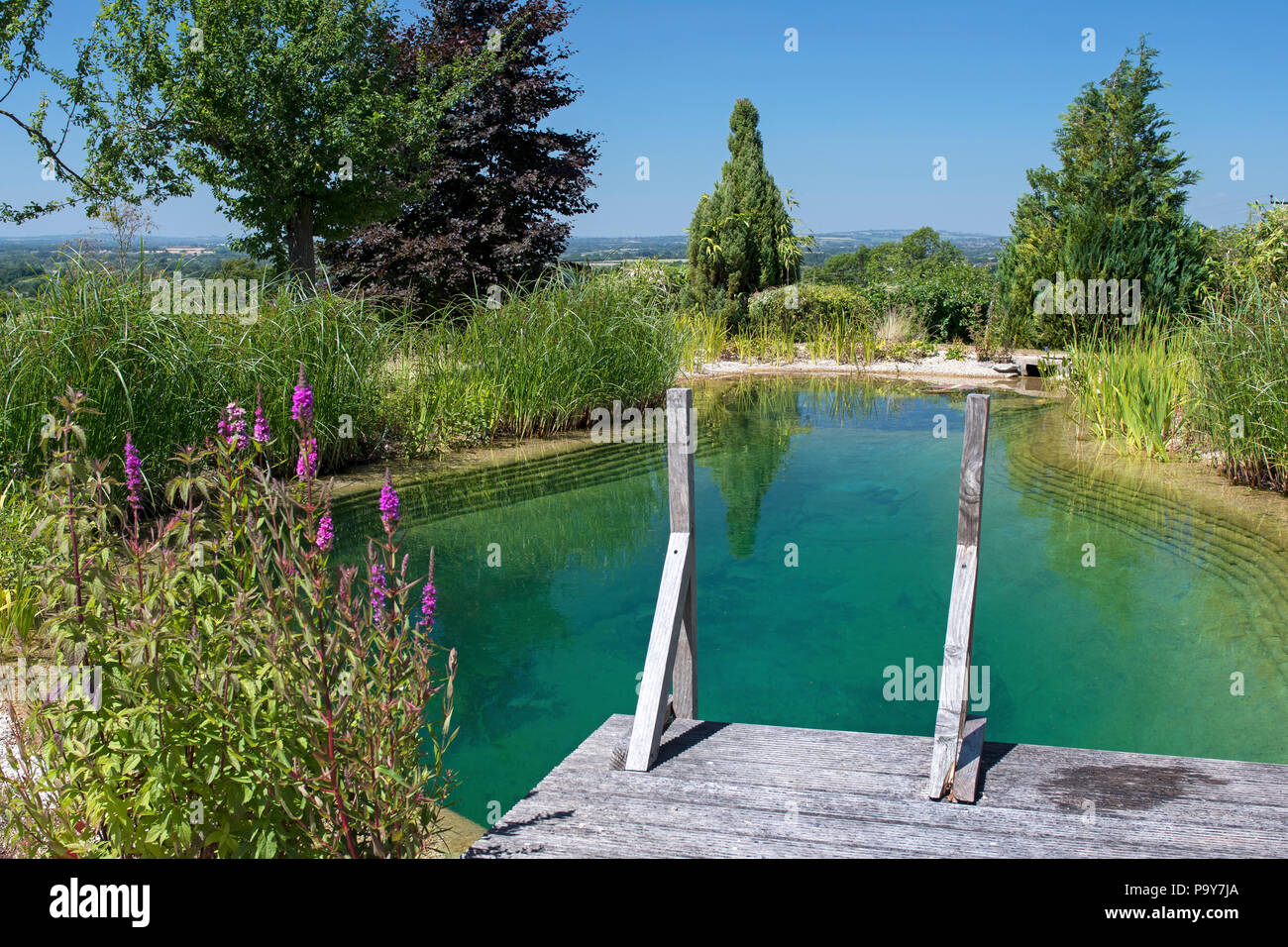Natural swimming pond, fresh water swimming pool Stock Photo ...