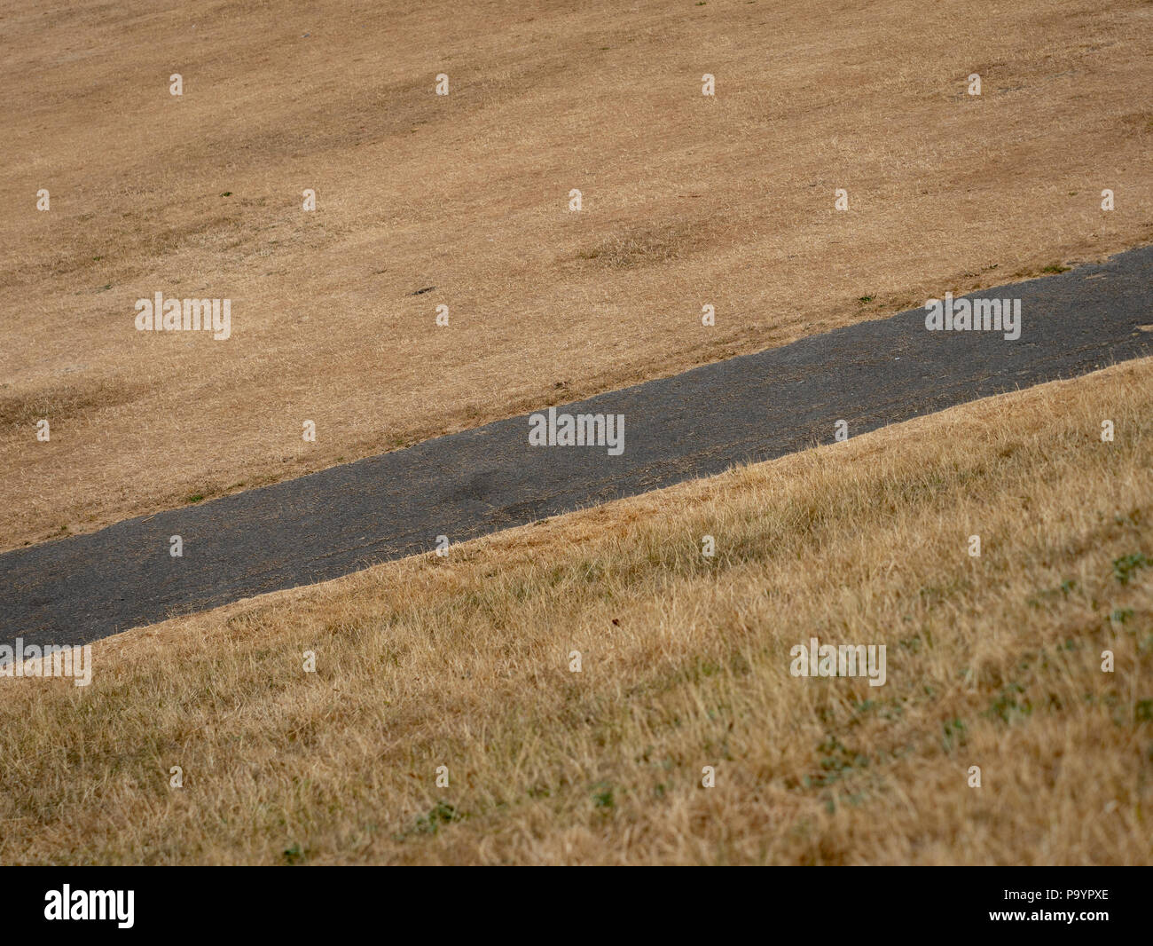 Dry brown grass field in a public park due to extreme hot weather - Stock Image