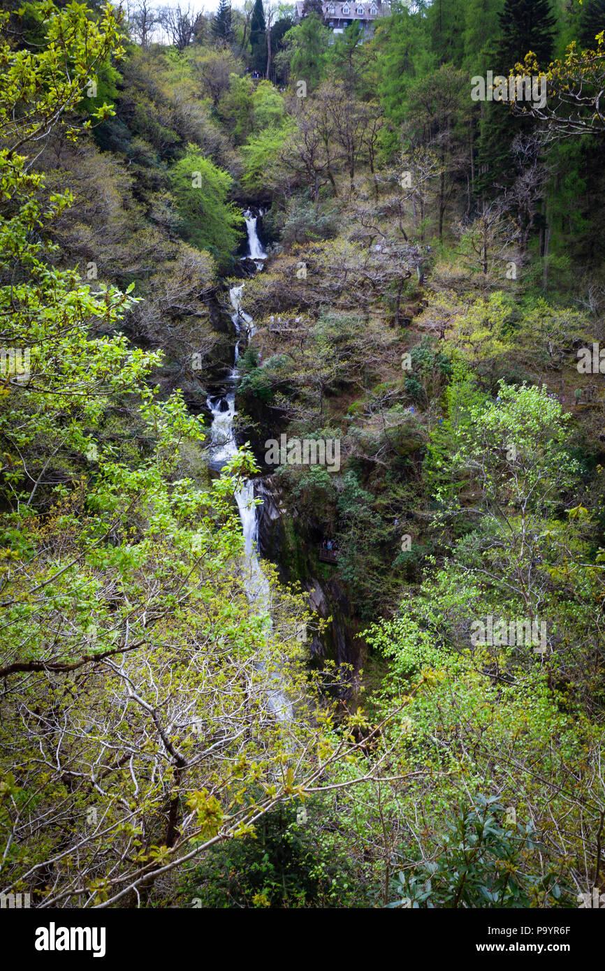 Devil's Bridge Falls – Rhaeadrau Pontarfybach - Ceredigion, Wales, UK - Stock Image