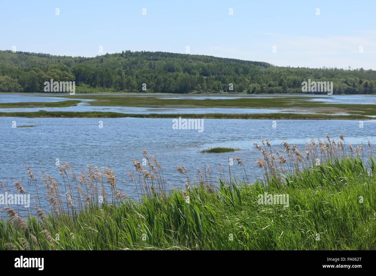 A stroll along the dyke walk gives beautiful views of the grass habitat and salt marshes; the Historic Gardens at Annapolis Royal, Nova Scotia Stock Photo
