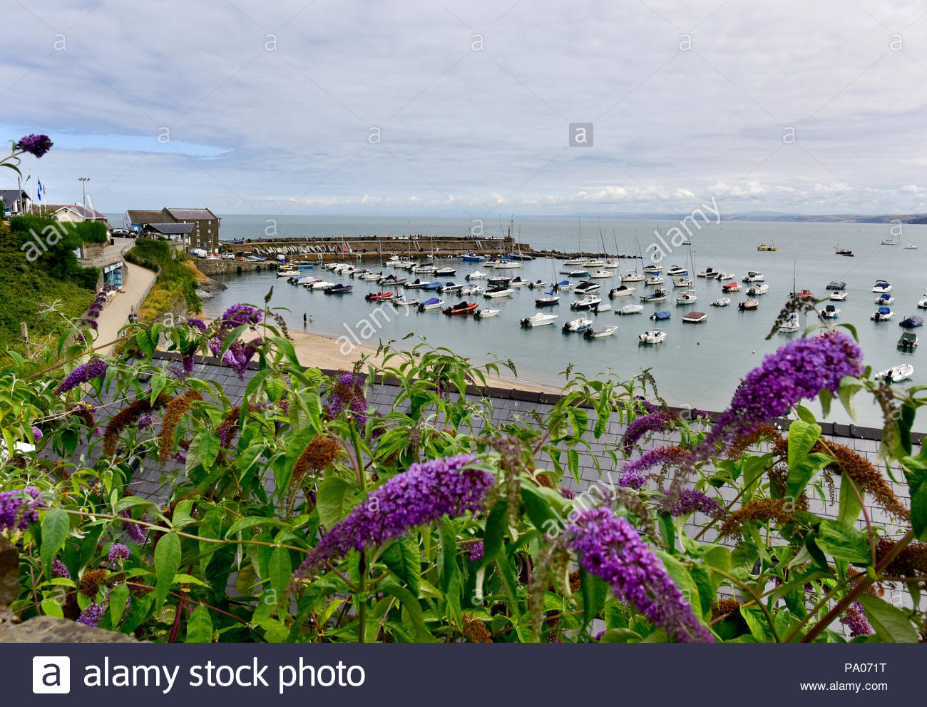 The harbour at New Quay, Ceredigion, Wales, UK - Stock Image