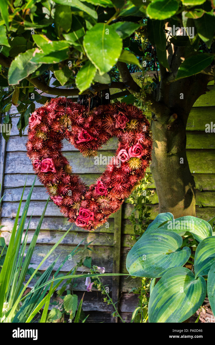 Rustic garden features of red heart shaped dried flower arrangement hanging from a Bay Tree with a Hosta and Crocosmia to complete the composition - Stock Image