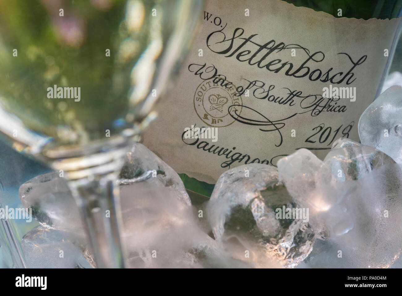 Stellenbosch South Africa white wine Sauvignon Blanc bottle in ice cooler with wine glass in sunny alfresco garden situation - Stock Image