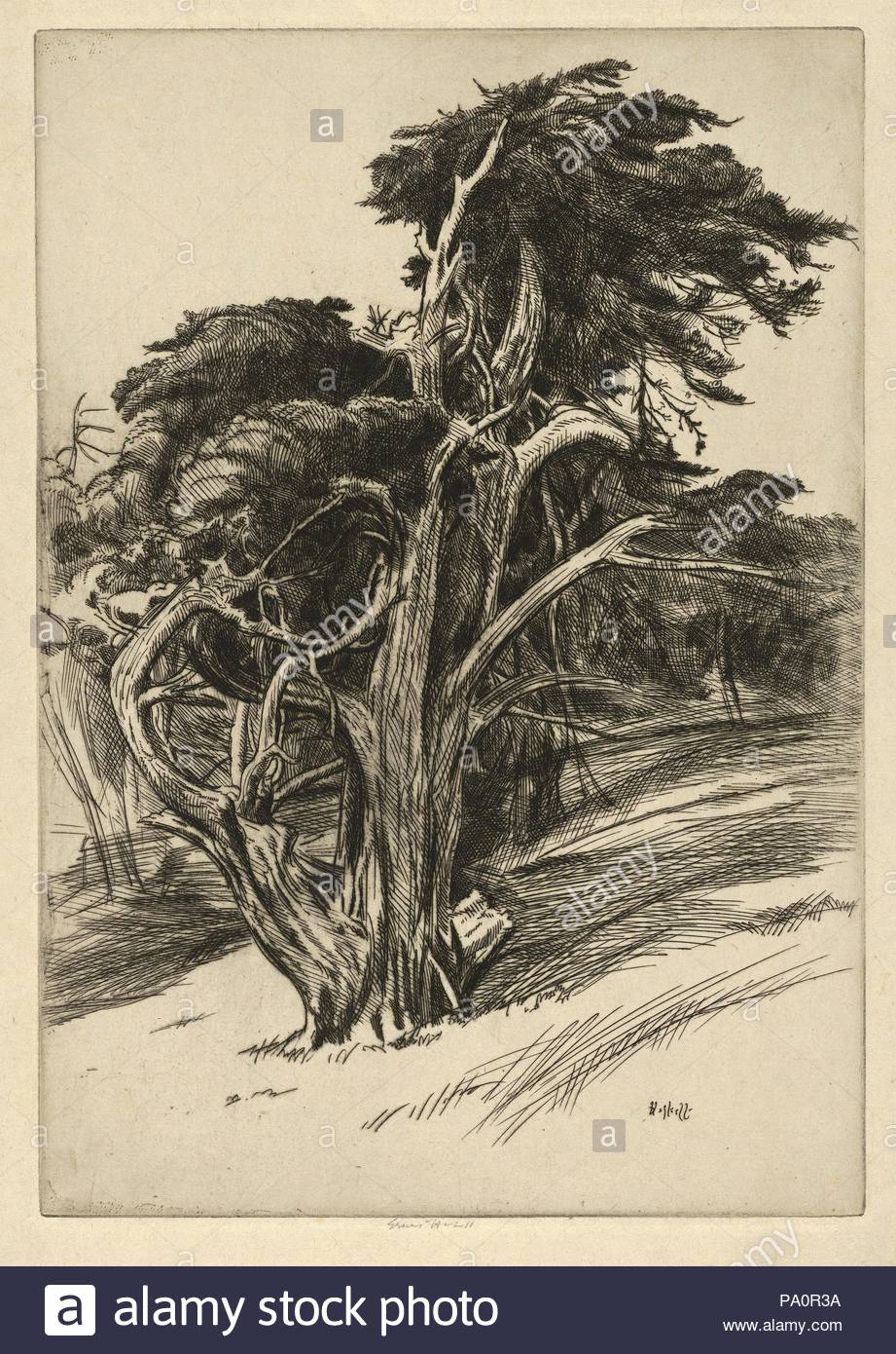 Drawings and Prints, Print, Plume of Balboa, Artist, Ernest Haskell, American, Woodstock, Connecticut 1876–1925 West Point, Maine, Haskell, Ernest, American, 1876, 1925, 1914–19. - Stock Image