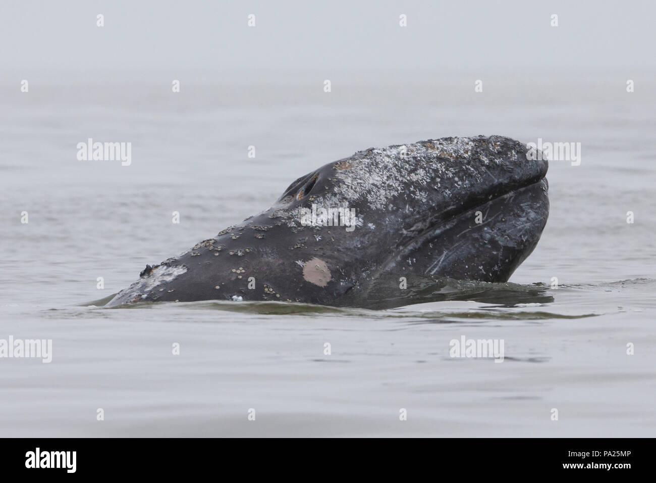 Sakhalin island dating