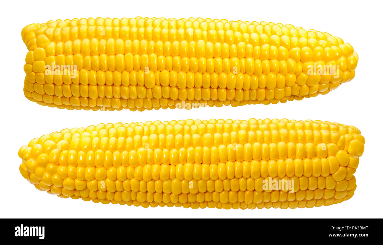 2 corn ears no leaves isolated on white background as package design element - Stock Image
