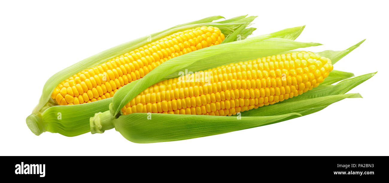 Corncobs or corn ears isolated on white background as package design element - Stock Image