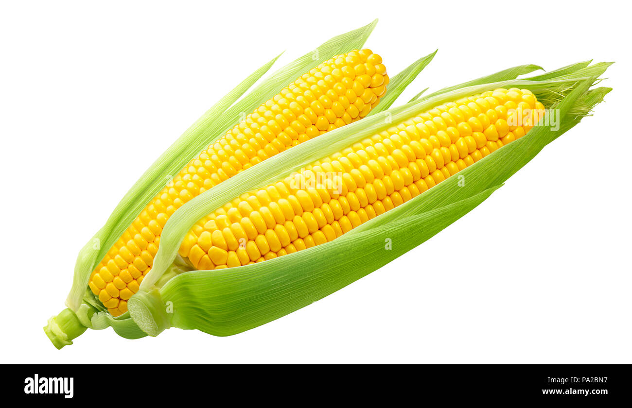 Double sweet corn ears isolated on white background as package design element - Stock Image